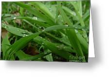 Droplets 01 Greeting Card