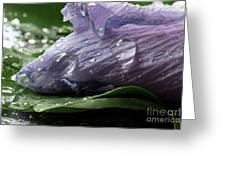 Droplets Of Nature Greeting Card