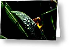 Droplets Of Water Greeting Card
