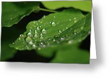 Droplets On A Leaf  Greeting Card