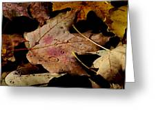 Droplets On Fallen Leaves Greeting Card