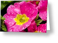 Droplets On Flower Greeting Card