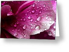 Droplets On Peony 1 Greeting Card