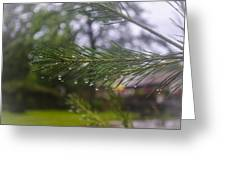 Droplets On Pine Branch Greeting Card