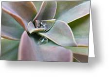 Droplets On Succulent Greeting Card