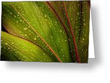 Droplets On Ti Leaves Greeting Card