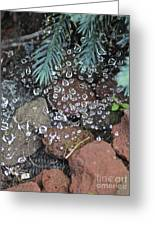 Droplets Over Web Greeting Card