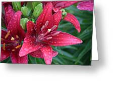 Dropplet Lilly Greeting Card