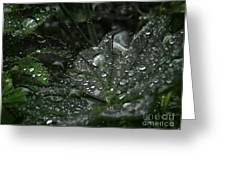 Drops And Leaf Greeting Card