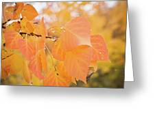 Drops Of Autumn Greeting Card