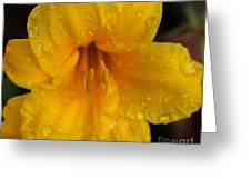 Drops Of Sun Greeting Card