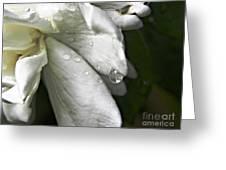Drops Of Sweetness Greeting Card
