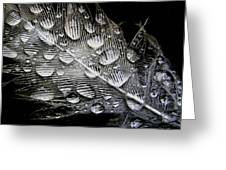 Drops On A Feather Greeting Card