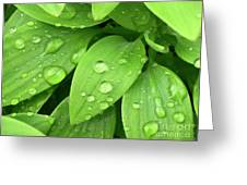 Drops On Leaves Greeting Card by Carlos Caetano