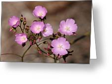 Drosera Menziesii Greeting Card
