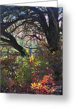 Drought Fall Greeting Card