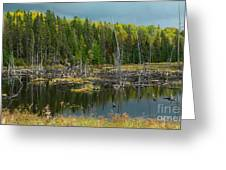 Drowned Trees Greeting Card