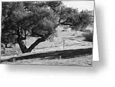 Drum Canyon Greeting Card