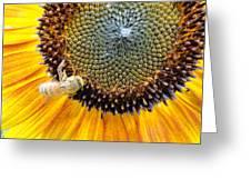 Drunken Bee Greeting Card