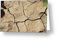 Dry Cracked Earth And Green Leaf Greeting Card