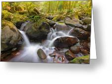 Dry Creek II Greeting Card