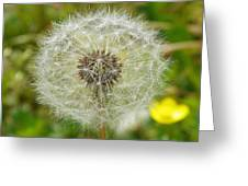 Dry Dandelion Greeting Card