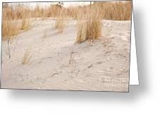 Dry Dune Grass Plants Greeting Card