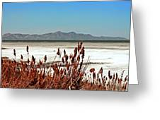 Dry Grasses At The Great Salt Lake Greeting Card