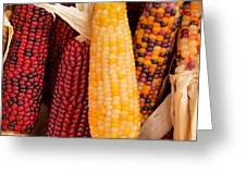 Dry Indian Corn Greeting Card