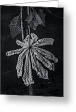 Dry Leaf Collection Bnw 2 Greeting Card