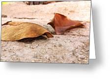 Dry Leaves Greeting Card