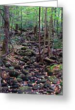 Dry River Bed- Autumn Greeting Card