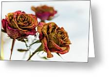 Dry Roses Greeting Card