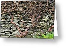 Dry Stone Wall And Vine Greeting Card