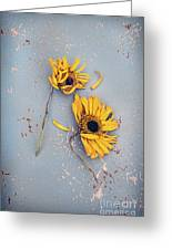 Dry Sunflowers On Blue Greeting Card