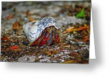 Dry Tortuga Hermit Crab Greeting Card