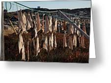 Drying Pieces Of Salt Cod In Bonavista, Nl, Canada Greeting Card