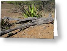 Agave And Log Greeting Card