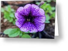 Dsc_1513 Web Greeting Card