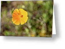 Dsc_1515 Web Greeting Card