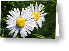 Dual Daisies Greeting Card