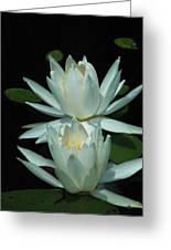 Dual Lilies Greeting Card