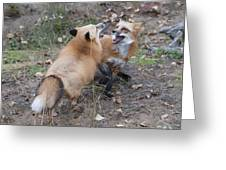 Dualing Red Foxes Greeting Card