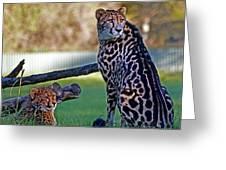 Dubbo Zoo Queen - King Cheetah And Cub Greeting Card