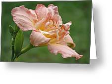 Dublin Elaine - Daylily Greeting Card