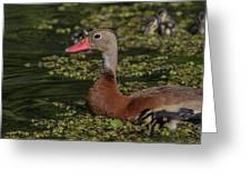 Duck 10 Greeting Card
