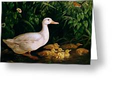 Duck And Ducklings Greeting Card by English School