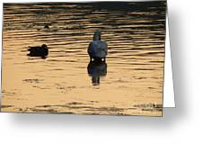 Duck And Swan At Sunrise Greeting Card