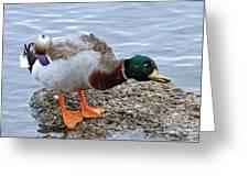 Duck Bath Alantic Beaches Nc Greeting Card