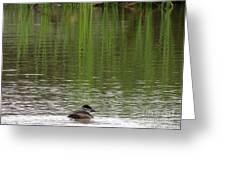 Duck Blinds Greeting Card